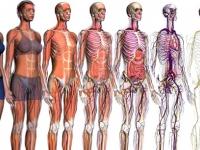 Corpo Humano e Suas Funções