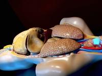 Ciências - Células, tecidos e sistemas do corpo humano