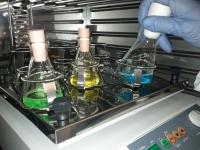 Ciências - Estrutura atômica, reações e funções químicas
