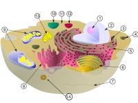 Biologia - Citologia