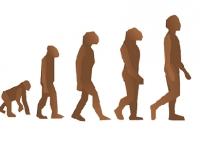 Biologia - Evolução