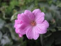 Repertório de Florais no Câncer de Mama