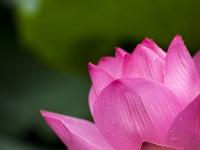Morfologia da flor