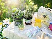 Horta Medicinal