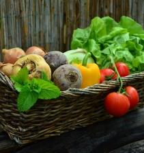 Cozinha -  Preparação de Vegetais