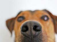 Primeiros Socorros - Cães e Gatos