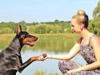 Terapias Naturais em Animais