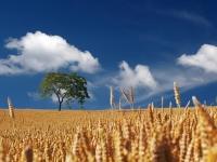 Agricultura Diversificada