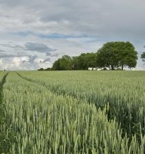 Três Pilares da Agricultura