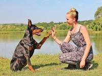 Cuidador de Cães - Básico
