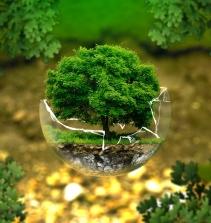 Direito Ambiental - Introdução. Constituição E Meio Ambiente. Política Nacional Do Meio Ambiente.