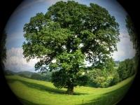 Novo Código Florestal - APP. SNUC. Responsabilidade Ambiental - Crimes Ambientais