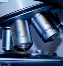 Bioenergética - vida e energia celular