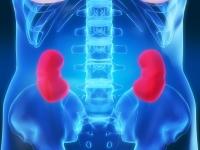 Fisiologia do Sistema Renal