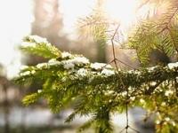 Ecologia e Sustentabilidade Ambiental