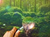 Boas práticas ambientais para empresas