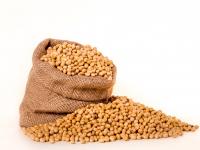 Cacterísticas agronómicas de la soya en función de las densidades de siembra y profundidad de deposición de abono