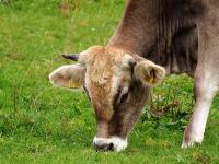 Producción Animal y Biotecnologías Pecuarias: Nuevos Retos
