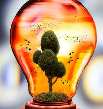 O consumidor e a ecologia