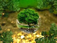 Meio ambiente -  Construção do pensamento ecológico