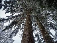 Ecologia - Relação entre o homem e a natureza