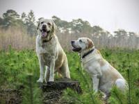 Inseminação artificial em animais