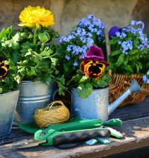Florescendo o seu jardim