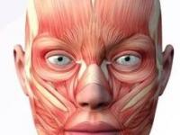 Fonoaudiologia na Paralisia Facial