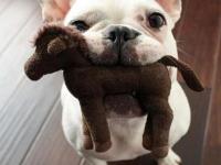 Veterinária: cuidados com os animais