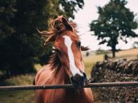 Reabilitação da saúde animal