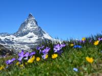 Conocer Suiza