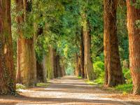Top 5 Parques y Jardines de Barcelona