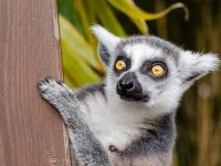 Viaje a Madagascar de mochileros