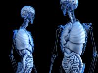 Competências em Anatomofisiologia