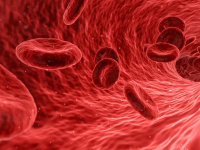 Sistemas biológicos: fisiologia e farmacologia