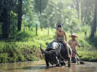 Inovações na Agricultura Familiar