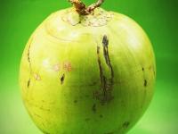 Compostagem Coco Verde