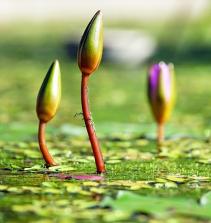 Botânica e jardinagem