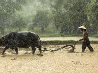 Utilidades para o Produtor Rural