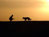 Adestramento de Cães e Comportamento Canino