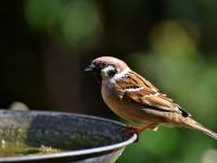 Cuidando de pássaros