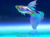 Cuidando de Peixes