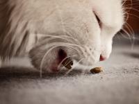 Ração Gatos