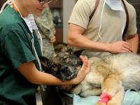 Primeiros Socorros Animais