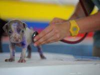 Primeiros Socorros em Cães