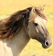 Cuidando de Cavalos
