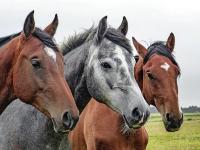 Cuidados com Cavalo