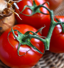 Tomates em Pet