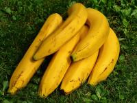Plantio de Bananas