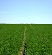 Agricultura, Cultivo e Jardinagem